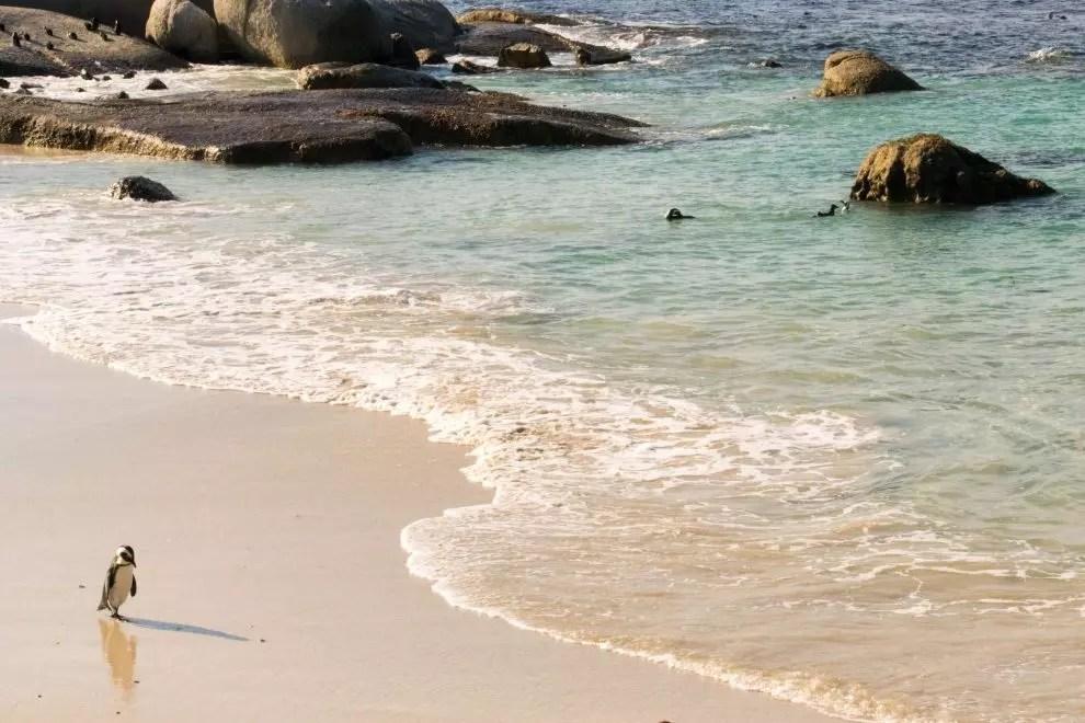 2 weeks in South Africa: Boulders Beach