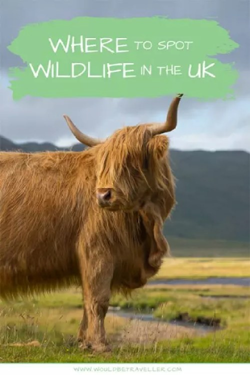 Would Be Traveller Where to spot wildlife in the UK