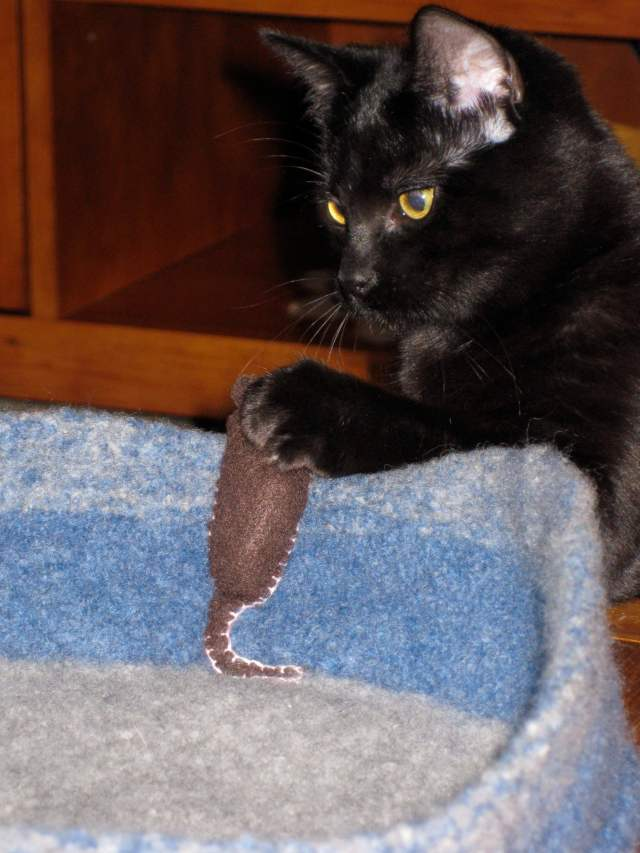 """""""Lucy 'catches' a mouse."""" Jacqui says: """"the mouse and the bed are felted. The cat, however, is not."""" - Jacqui Whitemore"""