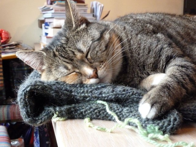 """'This is how my cat Ukkie prevents me from working with wool; she looks so happy sleeping on my WIP, I can't take it away from her, so have to work on something else instead"""" – Anja Vos."""