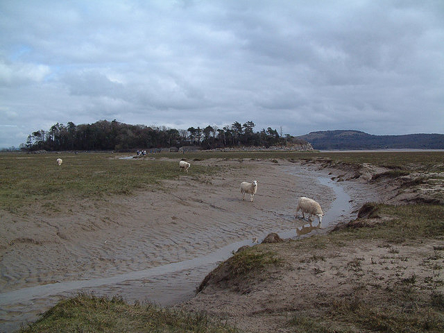 Grazed salt marsh to the west of Holme Island. photographed 22 March 2006 by Gary Rogers and shared on Wikimedia Commons using Creative Commons Attribution 2.0 Generic license here