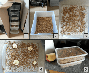 Process for getting dried mealworms