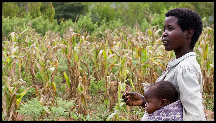 Farming in Malawi - Featured Image