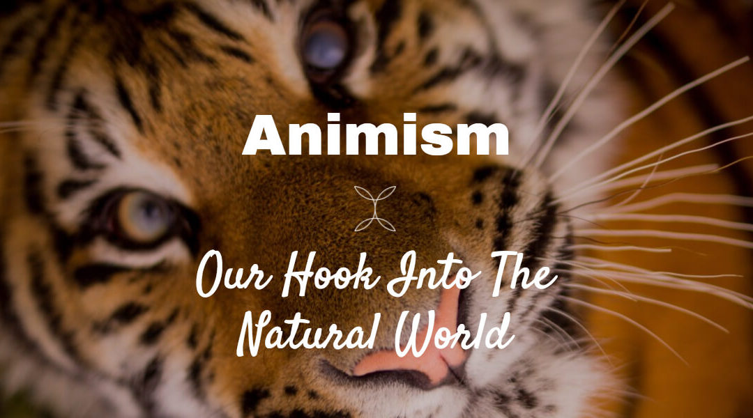 Woven Energy 11   Animism    our hook into the natural world Woven Energy 11     Animism    our hook into the natural world