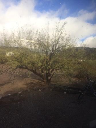 My shade tree