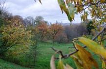9. View of London_ Greenwich Park _ WowingEmoji