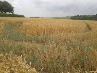 fields_shoreham_wowingemoji