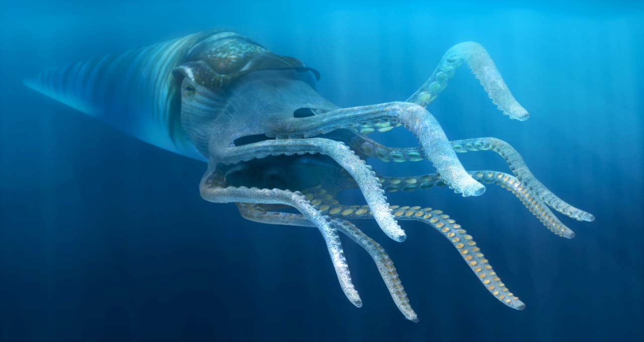 Rayonnoceras Espeyense - Prehistoric Nautiloid