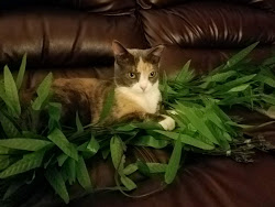 cat sitting on fake plants on top of couch