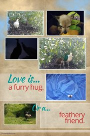 More stuff you can do with your pet photos
