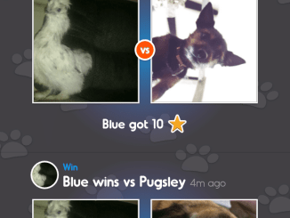 Screenshot from Pet Parade app