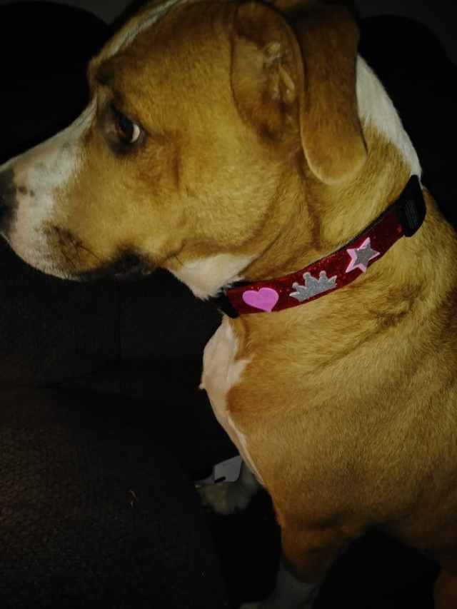 Scooby wearing collar
