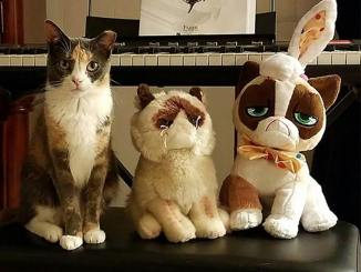 cat sitting next to two cat stuffed animals