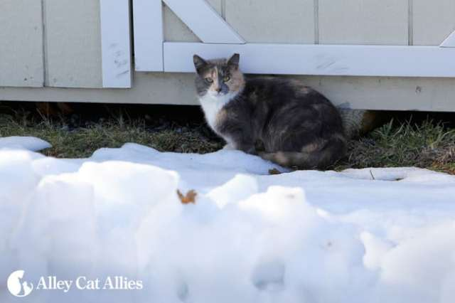 outdoor cat in cold weather by Alley Cat Allies