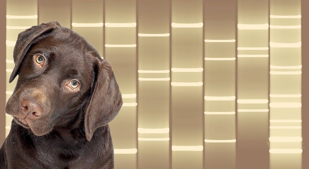 Dog DNA pet portrait