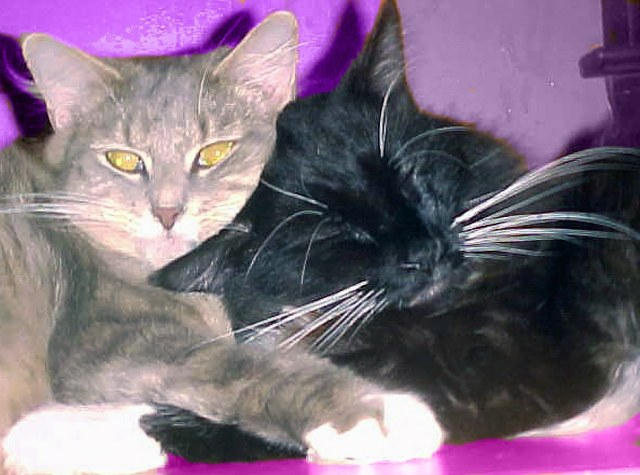 Two cats cuddling Valentine's colors