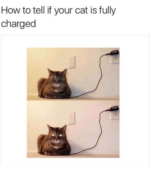 cat sitting on phone charger