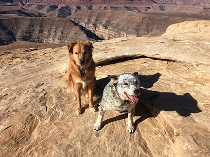 dogs at Grand Canyon