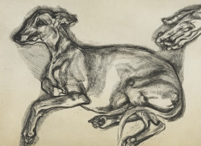 """Lucian Freud """"Pluto, aged 12"""" etching"""