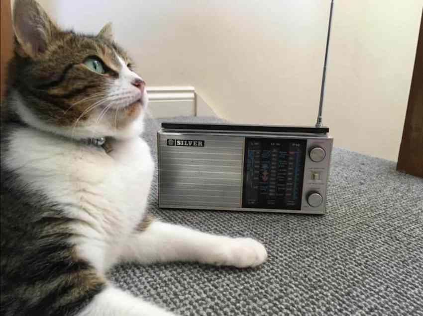cat listening to the radio