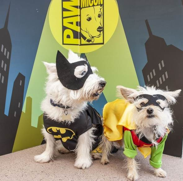 dogs in Batman and Robin costumes