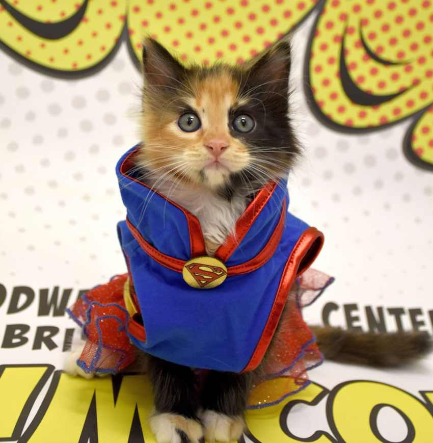 kitty in superhero costume