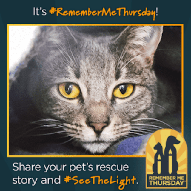 Remember Me Thursday message with cat photo