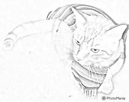 cat photo with sketch filter