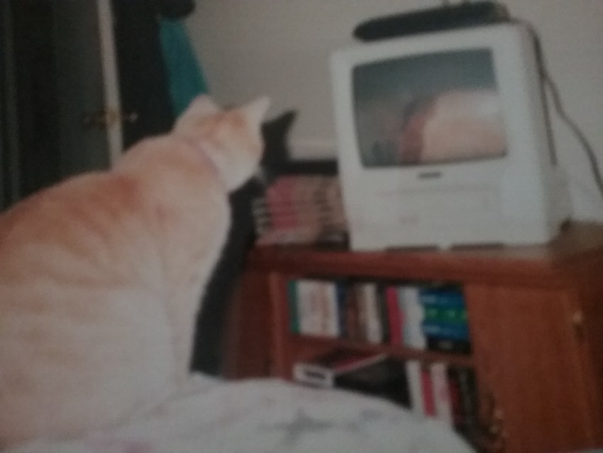 Chipper watching the news