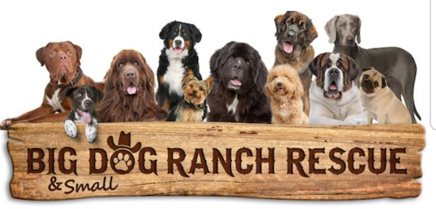 Big Dog Ranch Rescue banner