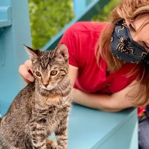 Cat and human on CatCafe Lounge Catio