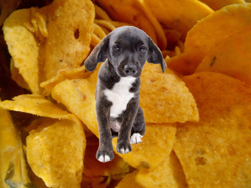 dog with corn chips