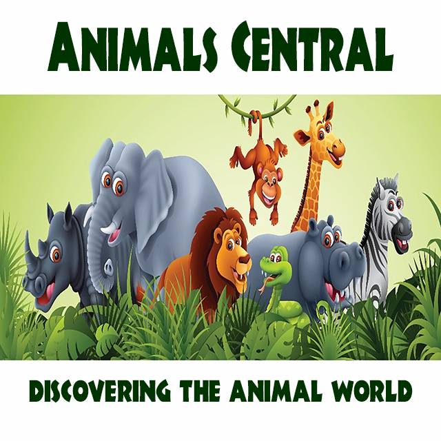 Animals Central ad with various animals