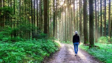 Photo of Change Your Energy with Walking Meditation.