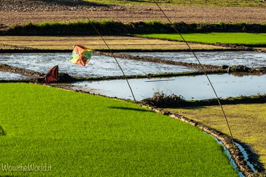 Navigare sul fiume Irrawaddy. Un aquilone volteggia su un campo di riso a Bhamo, nel Nord della Birmania   Foto di Giorgiana Scianca, wowtheworld