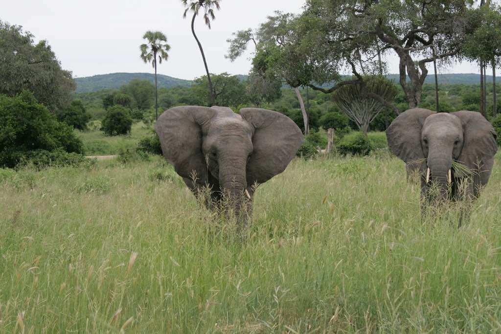 Ruaha National Park, Tanzania - by Lmfna :Flickr