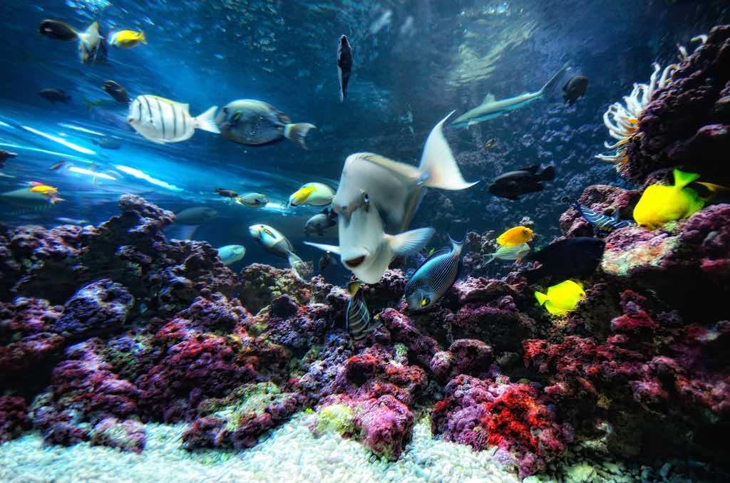 Bergen Aquarium - by Arne Halvorsen - aha42 | tehaha:Flickr