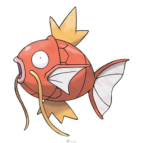 鯉魚王食譜