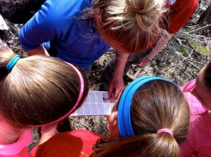 Keystone Science School instructor Kristen Greenwald helps students put the aquatic macroinvertebrates they found in a nearby stream into an ice cube tray for identification.