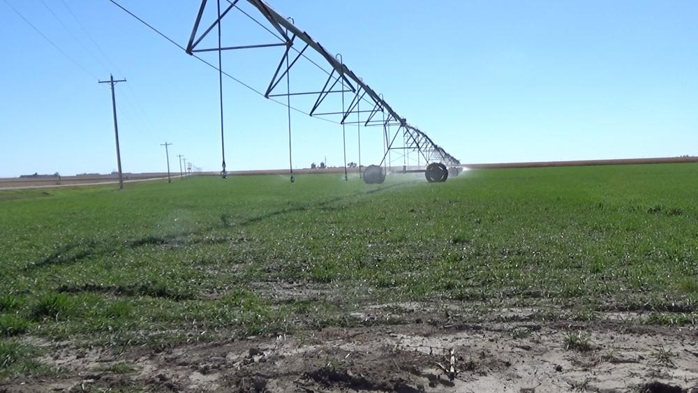 A center pivot irrigation system near Wray, CO