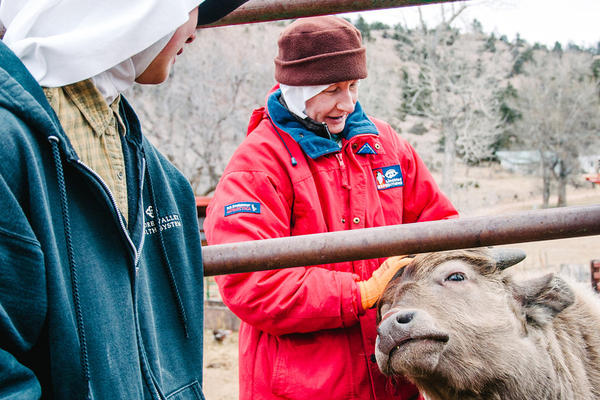 Sisters Ann (pictured left) and Elizabeth tend to Yoda, a young water buffalo calf during his morning feeding at the Abbey of St. Walburga.