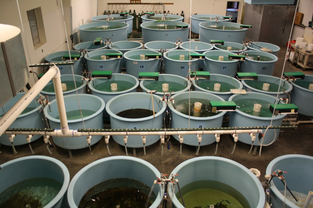 The Ouray National Fish Hatchery, Grand Valley Unit, in Grand Junction, Colo. has 50 large indoor tanks where endangered humpback chub and bonytail are raised.