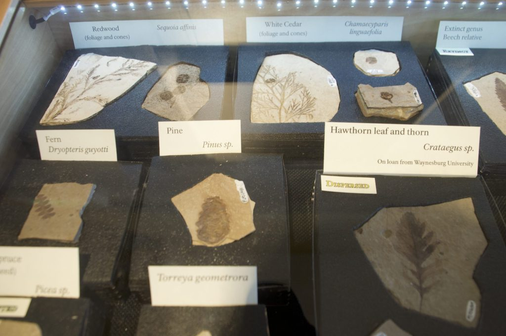 Display of fossils at Florissant Fossil Beds National Monument
