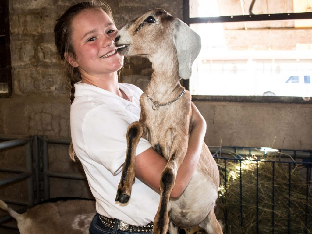 14-year-old Alice Zuber of Fairplay showed goats at the 2018 Colorado State Fair.