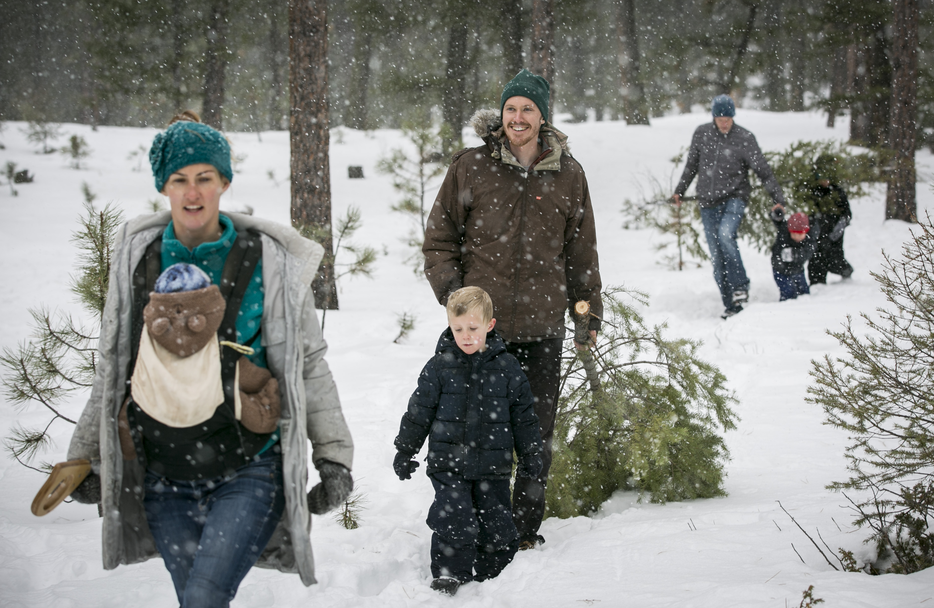 <p>John McGuin, center, drags his Christmas tree out of the Pike National Forest near Buffalo Creek, Colo. on Saturday, Dec. 5, 2015. Atleft is his sister-in-law Amy, and atright is brother Patrick. They are surrounded by Amy and Patrick's sons.</p>
