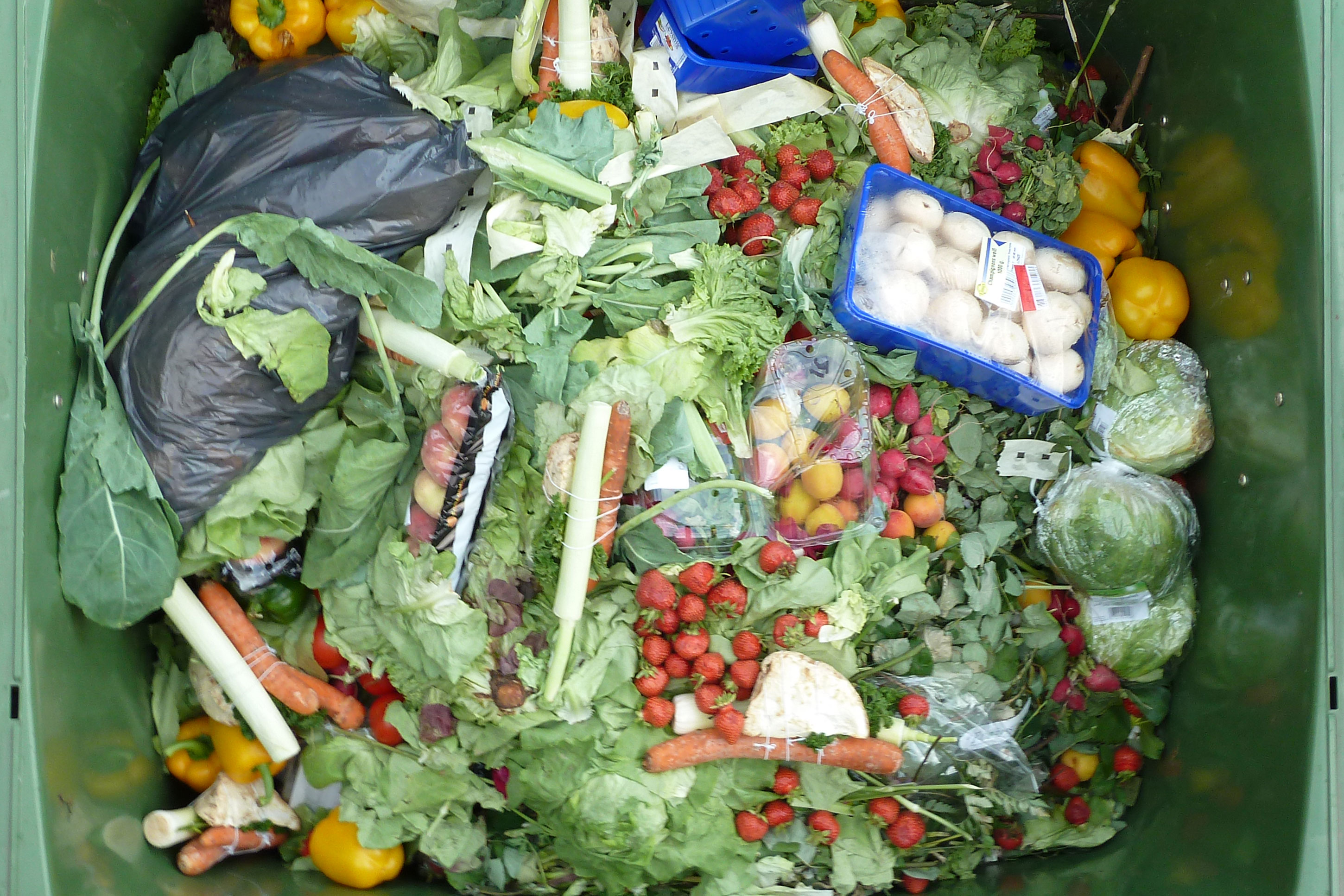 <p>A 2014 U.S. Department of Agriculture report found that 35 to 40 percent of all the food produced every year gets thrown away.</p>