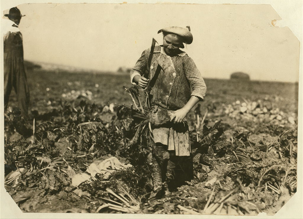 <p>Pauline Reiber, 9 years old, tops beets with a knife on the High Plains near Sterling, Colorado, in 1915.</p>