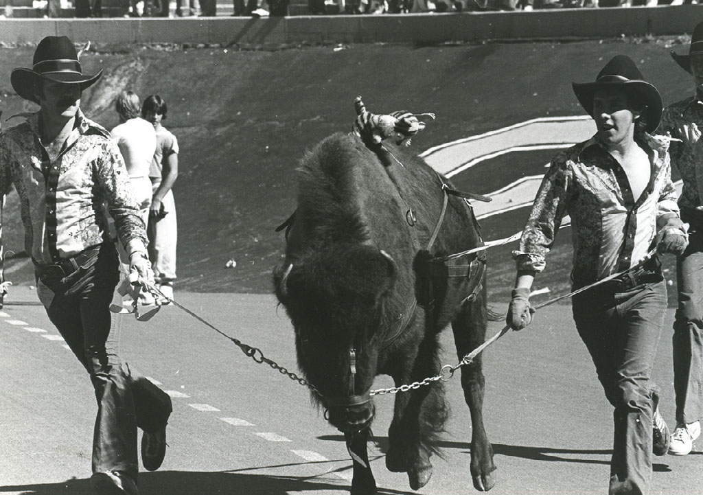 <p>Ralphie, CU's live buffalo mascot, ran her first game on Sept. 16, 1967, a 27-7 win over Baylor.</p>