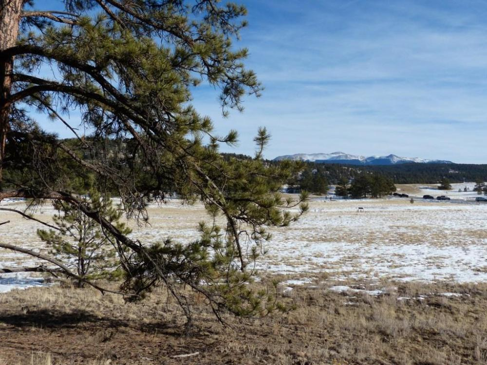 "<p>Author David George Haskell made an ultrasound recording of water drying up inside this ponderosa pine near Florissant, Colorado for his book ""The Songs of Trees.""  The book won the 2018 Bourroughs Medal for distinguished natural history writing.</p>"