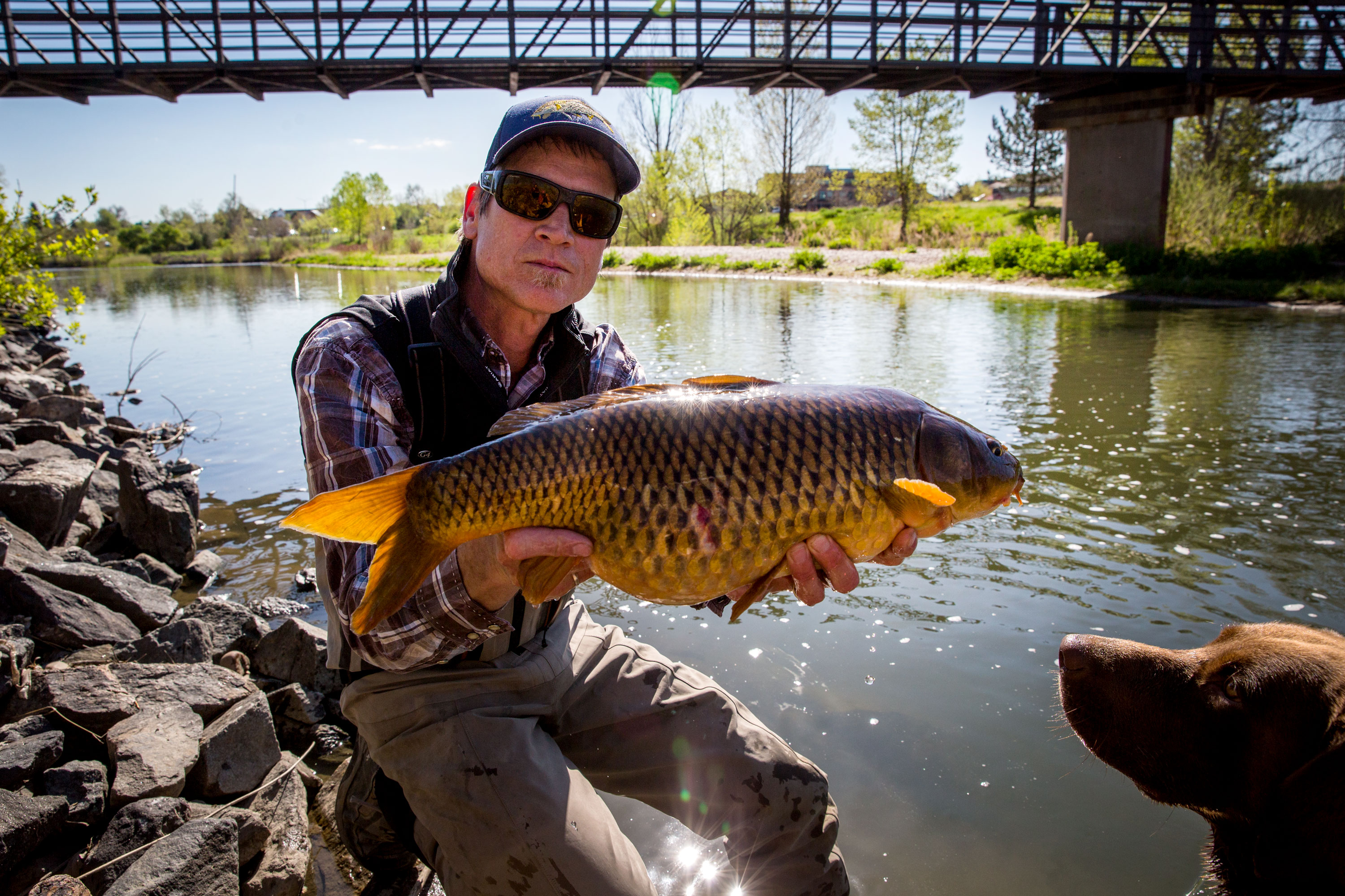 <p>Dan Lundahl handles a carp he caught Monday morning May 13, 2019 on the South Platte in Littleton, while his dog Ruger looks on.</p>
